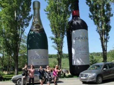 regatul vinului