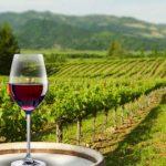 chile viñas-mundo-gourmet-chile